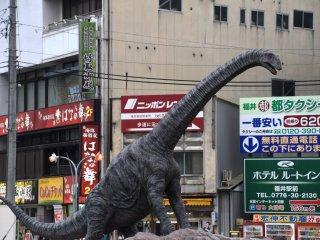 Một hóa thạch của Fukui-titan đã được tìm thấy tại thành phố Katsuyama năm 2007. Chiều dài thân ước tính khoảng 10 mét, và bản sao này cao 6 mét.