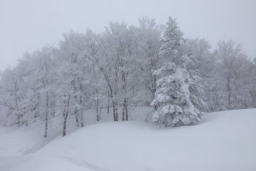 <p>It&#39;s like being in a winter wonderland.</p>