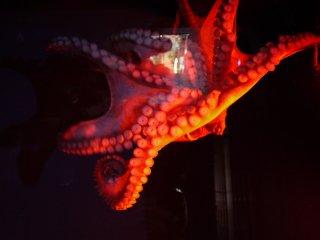 Плывущий осьминог, одни ноги и присоски