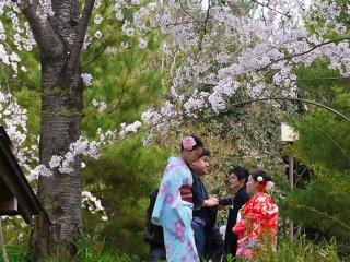 Более повседневное кимоно, но всё таки очень красивое