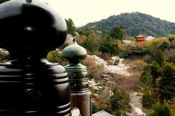 Bunga Sakura di Kuil Kiyomizu