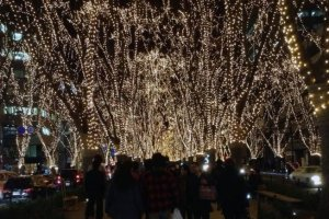 The Pageant of Starlight is a month long illumination of Jozenji-dori Avenue