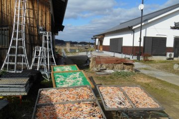 <p>Carrots and radishes being dried in the sun</p>
