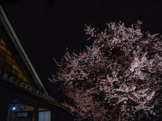 The Samurai residence and old cherry tree