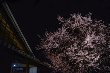<p>The Samurai residence and old cherry tree</p>