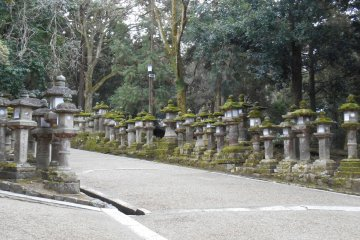<p>Path lined with stone lanterns</p>