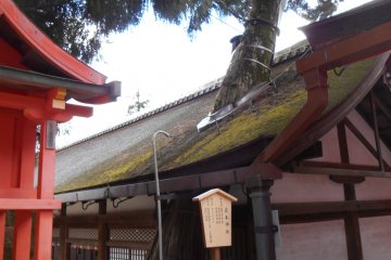 <p>A hole has been built into the roof of Naoraiden Hall to let this tree grow</p>