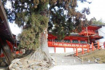 <p>The Chumon, gate of the main shrine</p>