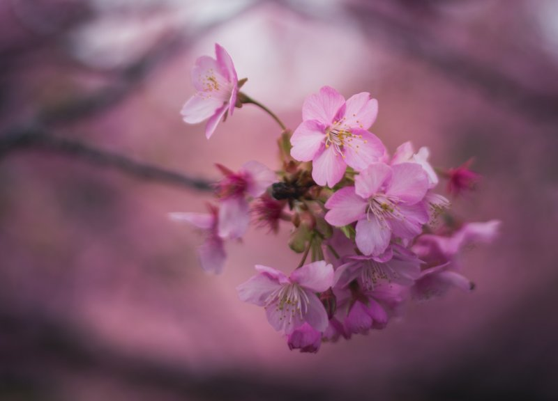 <p>Even up close, the blossoms amaze with their delicate beauty.</p>