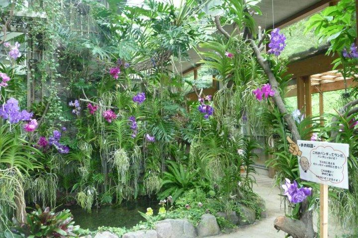 Orchid Sanctuary Dogashima, Izu
