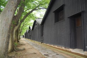 In the back of the Sankyo Rice Warehouses there is a row of impressive Zelkova trees. They protect the warehouses from wind and sunshine.