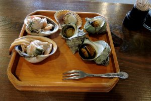 Large clams, scallops and turban shells