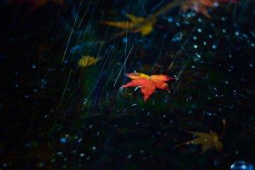 폭포에 낙엽이 지다