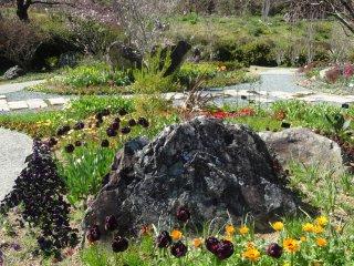 Rất nhiều loài hoa để thưởng thức vào các tháng mùa xuân