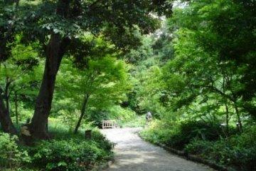 The stunning greenery in Tokugawa-en