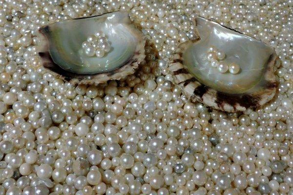 Precious sea gems!