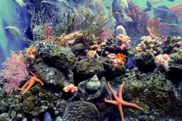 <p>Underwater world teeming with life! &nbsp;</p>