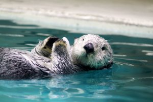 I was really looking forward to meeting the sea otter!