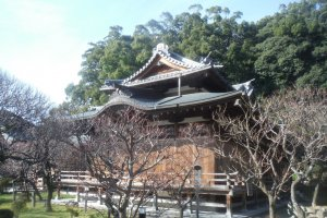 อาคารญี่ปุ่นโบราณ ท่ามกลางสวนดอกบ๊วย สวยงาม