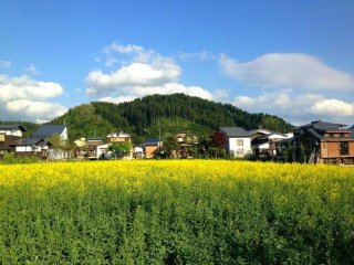 Blue, yellow and of course green: the vibrant colours of Kaneyama in May.