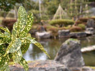 뒤에 정원 연못과 다양한 잎
