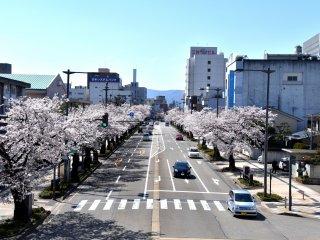Con đường Sakura ở Fukui nhìn từ cây cầu đi bộ (sakura nghĩa là hoa anh đào)