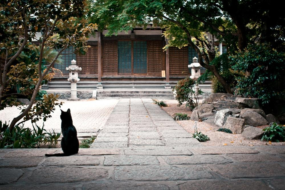 A lone cat sits and enjoys the sunshine at Tochoji temple in Hakata