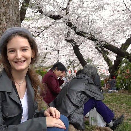 우에노 공원의 하나미