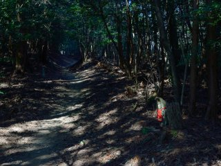 木漏れ日の中を道はのびる