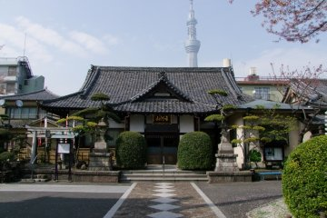 Ho-on Temple Under Cherry Blossoms