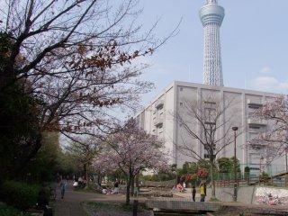 Токио СкайТри маячит позади