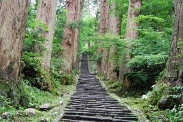 Mount Haguro's Avenue of Centuries-old Cedar Trees