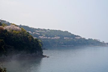 <p>The Cherry Line extends as ribbon of pink that cuts along the sea coast, up the Minamata River, and to the top of Mt. Nakaoyama.</p>