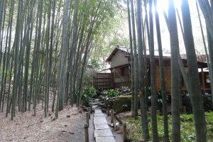 โรงน้ำชาในป่าไผ่
