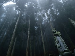 The temple is located in a cedar forest