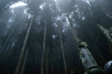 <p>The temple is located in a cedar forest</p>