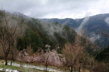 <p>Snow may fall even in spring</p>