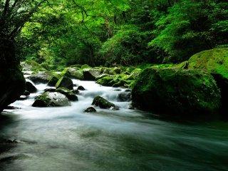 """Será um mundo totalmente vestido de verde sinónimo da palavra """"refrescante""""?"""