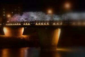 Dreamy image of Sakura Bridge