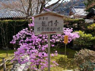 꽃이 만발한 정원으로 향하는 길