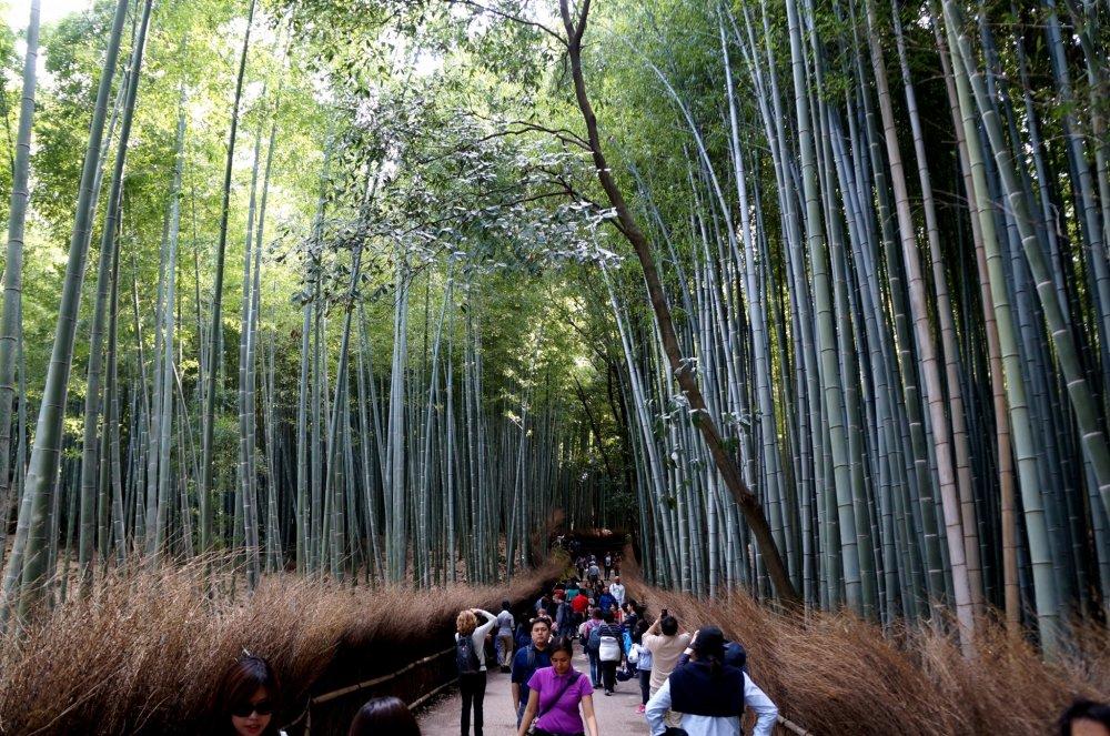 텐류지 후문으로 나오면 바로 보이는 대나무 숲
