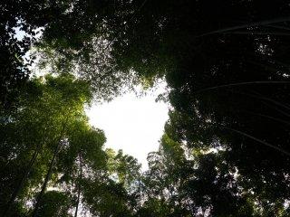 꽤나 높게 자란 대나무가 시원한 그늘을 만들어 준다는..