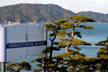 <p>A manicured pine beside the island&#39;s sign</p>