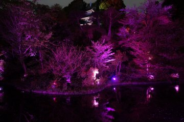 <p>The traditional garden of Hotel Chinzanso is lit up in pink for cherry blossom season</p>