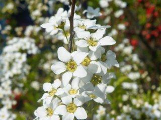 Tidak seperti kebanyakan tempat hanami, di sini terdapat berbagai variasi bunga dalam jumlah yang sangat banyak