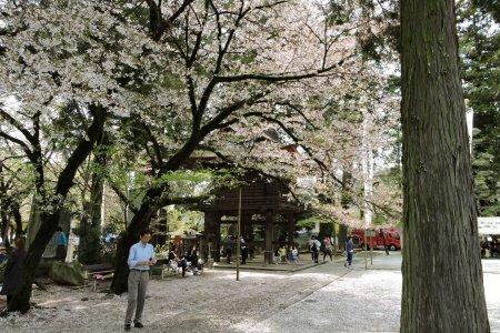 Lễ hội Mùa xuân ở Erinji