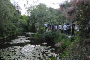 Monet-inspired Pond at Chichu Museum