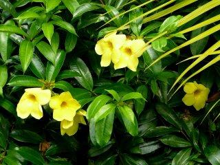 Желтые цветы, названия которых я, к сожалению, не знаю