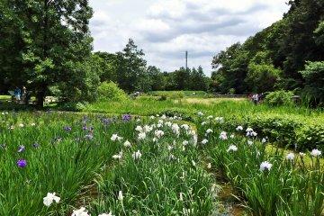 Rahasia Taman Botani Jindai