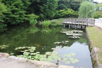 <p>A lovely pond filled with lily pads</p>